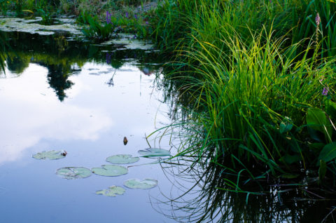 Revitalisation étang