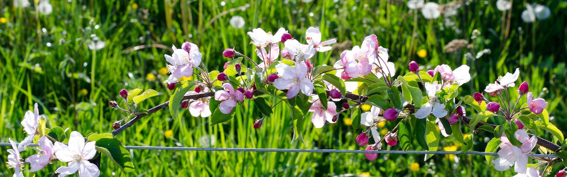 Legumes A Mettre Dans Le Jardin domainedesgorges.ch boudry gorges de l'areuse production